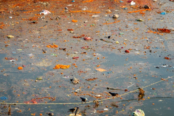 the filthy holy water of the Ganges